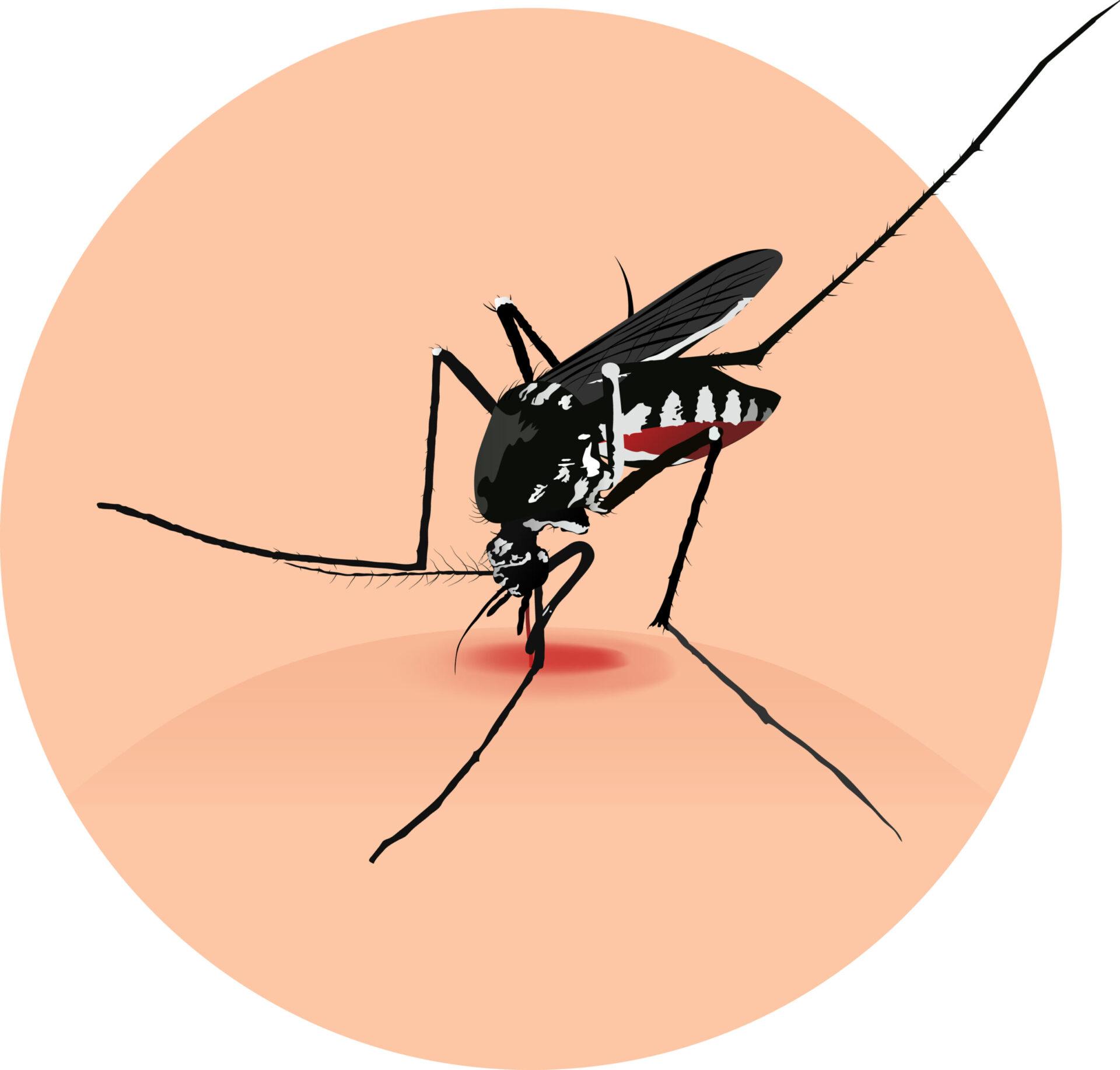 Vara suntem mai expuși înțepăturilor de insecte. De cele mai multe ori, ele provoacă disconfort temporar, dar în unele situații pot fi foarte periculoase pentru organism.