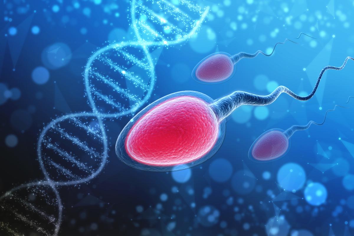 analize medicale barbati pentru sarcina. trei spermatozoizi inoata langa un lant ADN