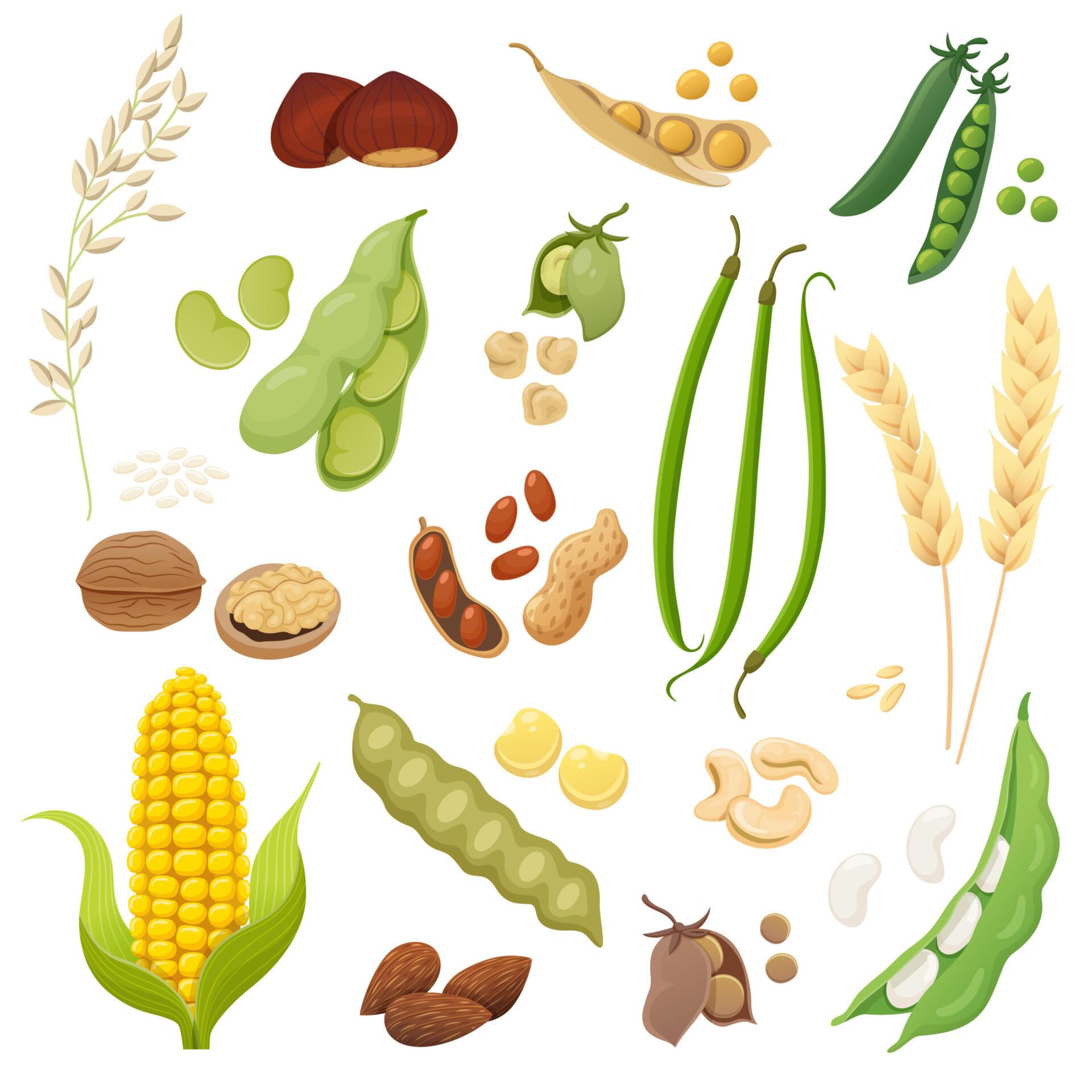 Alimente vegetale bogate în proteine care sunt foarte accesibile sunt leguminoasele. Ele pot asigura o mare parte din necesarul zilnic.
