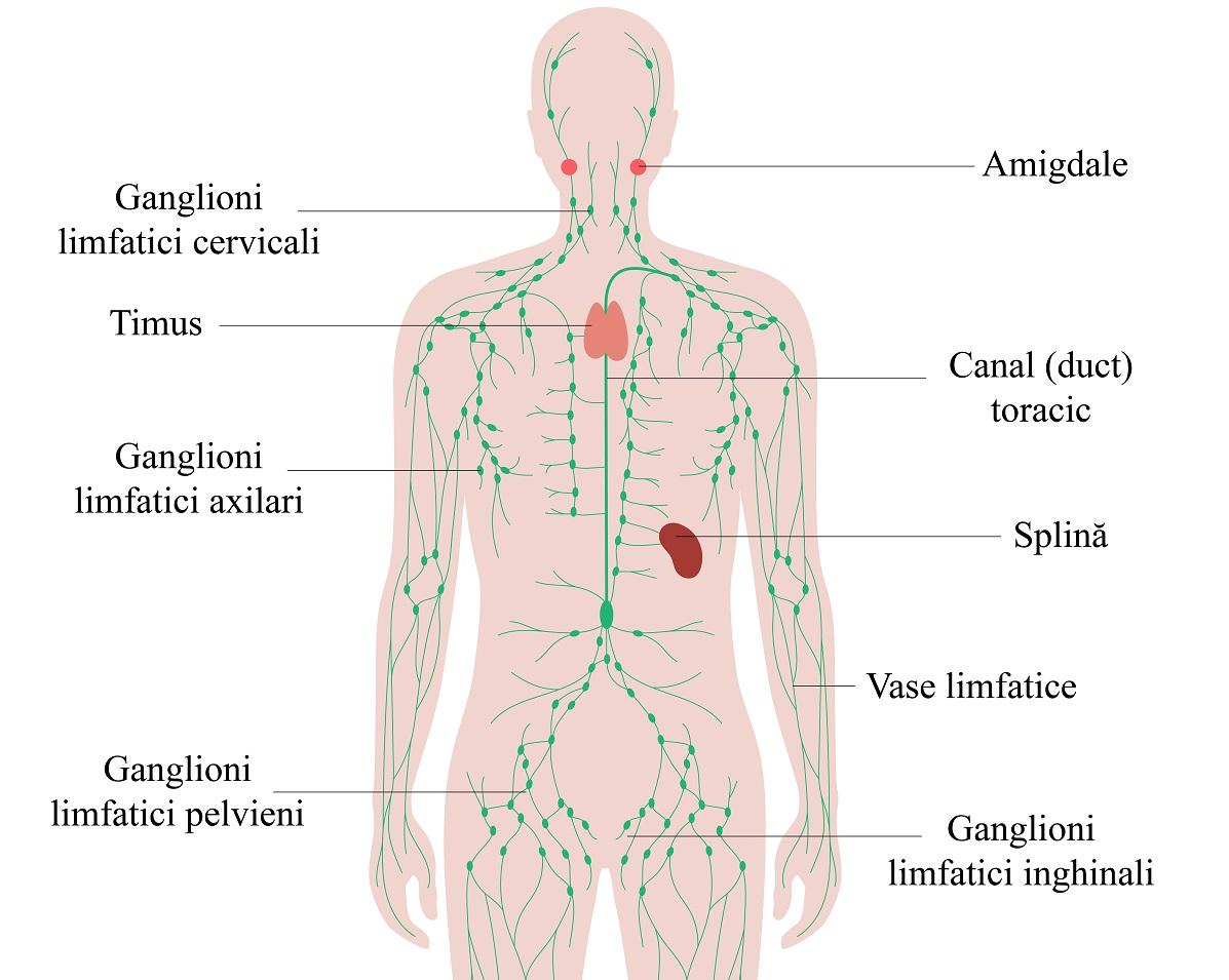 cancer sistem limfatic simptome recenzii antihelmintice